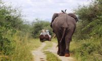 elephants_murchison falls national park.jpg